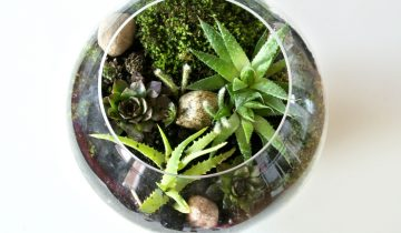 Las w szkle i zdrowe rośliny, do sypialni