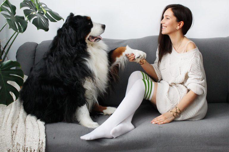 blog, pies, zdrowie, usmiech